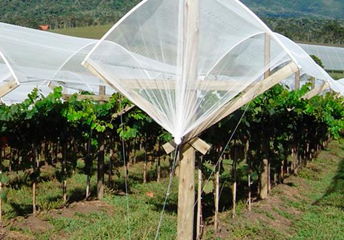 Mourões para Fruticultura
