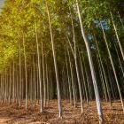 A Ecotrat celebra a Semana do Meio Ambiente