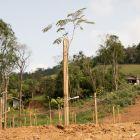 Ecotrat presente no projeto de arborização do Parque Salto Grande em Ituporanga
