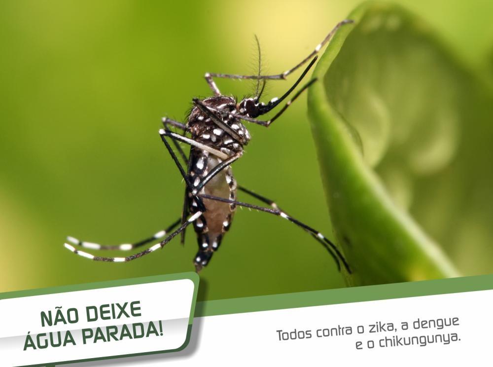 A Ecotrat está fazendo a sua parte na luta contra o Aedes aegypti.
